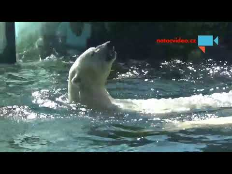 Medvědí koupel