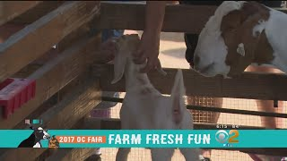 Danielle Gersh brings us the sights and sounds from the opening day of the OC Fair in Costa Mesa. This year's theme is Farm ...
