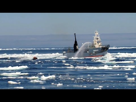 Japanese whaling fleet and Sea Shepherd's first engagement of the campaign