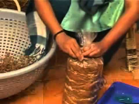 Oyster Mushroom Production