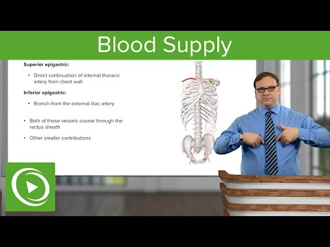 Blood Supply of the Abdominal Wall – Anatomy | Lecturio