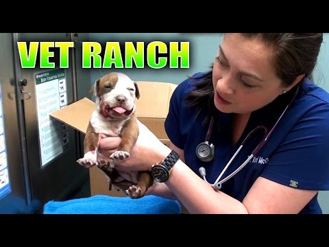 Pitbull puppy with a broken jaw gets rescued