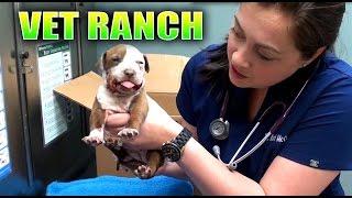 Broken Jaw Puppy Rescued