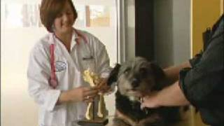 Stem Cell Therapy for Animals