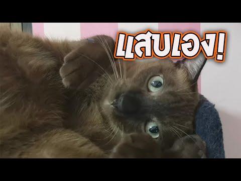 พระเอกละครแมวของทองดี คือ แสบเอง!! : พี่ทองดี