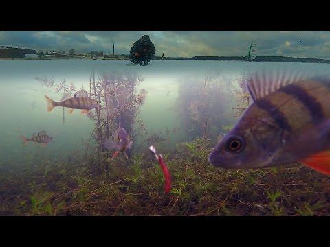подводная съемка окуня видео