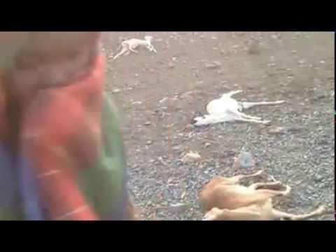 Ethiopian News - Sign of Drought in Afar Region of Ethiopia