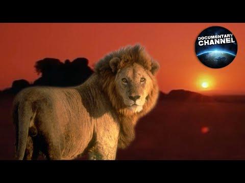 Afryka: Serengeti - Africa: The Serengeti
