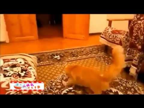Mèo Vs Mario