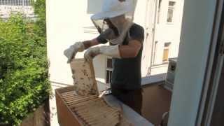 Videos des Stadtbienen e.V.