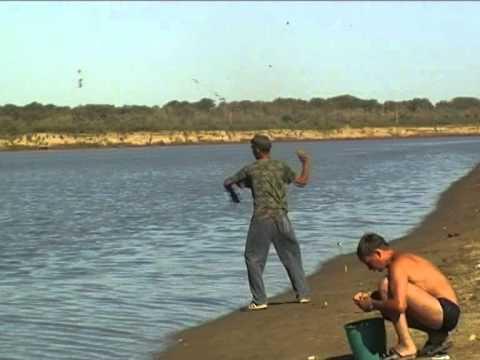 ловля сазана на реках снасти видео