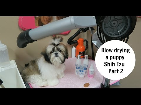 PUPPY BLOWDRY and Oster Stand dryer review
