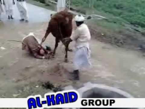 رفسه باكستانيه محترمة