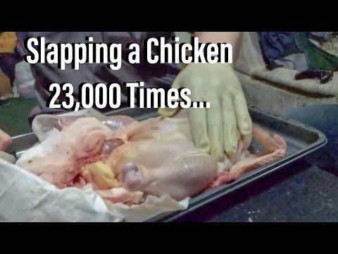 Slapping a Chicken 23,000 Times...