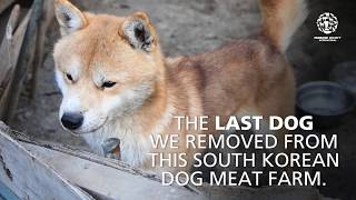 Last dog removed from South Korean dog meat farm by The Humane Society of the United States