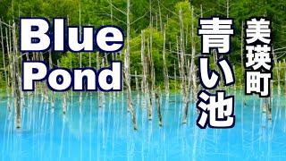 【北海道】冬にも来てほしい美瑛町 青い池