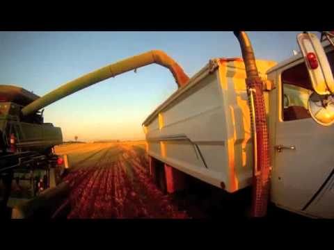 how to harvest grain