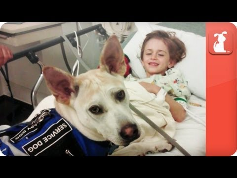 Amazing Dog Detects Child's Seizures