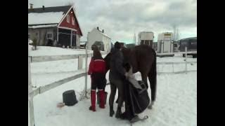 Heste har lært at kommunikere med mennesker