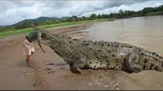 Video crocodile vs men ( real fight ) MP3, 3GP, MP4, WEBM, AVI, FLV Desember 2018