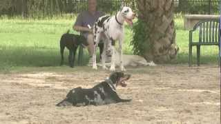 Fox 8 News (Dog Parks Around The City)
