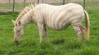 Rare and Unusual Animal Colors and Markings by Epic Wildlife