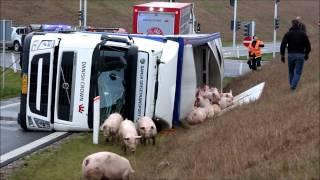 Danskerne betaler millioner til lange dyretransporter