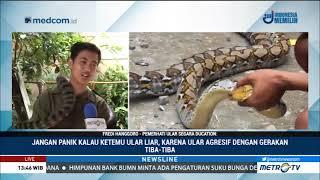 Video Sering Muncul Ular Besar, Ternyata Lenteng Agung Jadi Sarang Ular-ular Buas di Jakarta MP3, 3GP, MP4, WEBM, AVI, FLV Januari 2019
