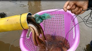 Download Video New Technique Of Catching - Believe This Fishing? Unique Fish Trapping System Country Fish (part 3) MP3 3GP MP4