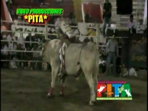Jaripeo Feria Chilpancingo 2013, Torneo de los Cinco Mil Dolares