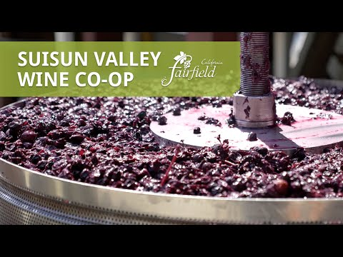 Discover the Suisun Valley Wine Co-op - Fairfield, CA