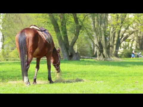 Horseback Riding in Utah - Guided Adventures near Salt Lake & Park City