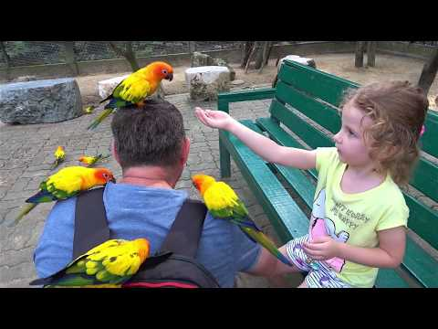 Baby Rides In The Zoo And Feeds Animals Funny Video For Kids