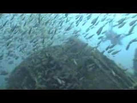 Buceo en el pecio Rosin