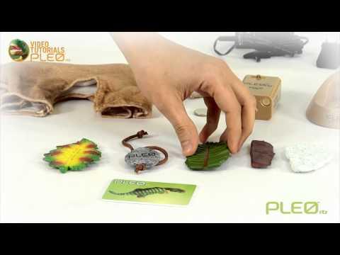 Pleo dinosaurus robot
