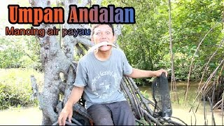 Download Video Terbukti paling unggul umpan mancing ikan di air payau MP3 3GP MP4