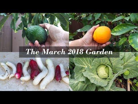 Happy Spring Season! California Garden Tour - March 2018