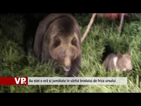 Au stat o oră și jumătate în vârful bradului de frica ursului