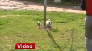 Oynuyorlar, aynı yemeği paylaşıyorlar, eğleniyorlar. Bu dostluk hikayesi bir karga ile köpek arasında.http://www.netgazete.com/video/598830.html