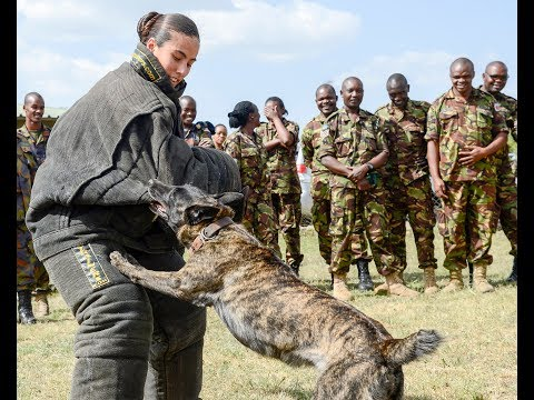 Kenyan and American service members teamed up to share the best ways to treat and train Military Working Dogs in the field, at the 1st Canine Regiment headquarters in Nairobi, August 6-10.