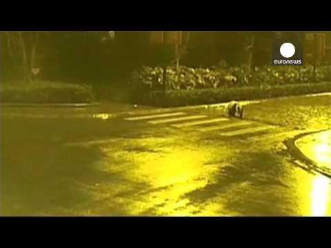 Panda on the loose Giant panda roams China streets