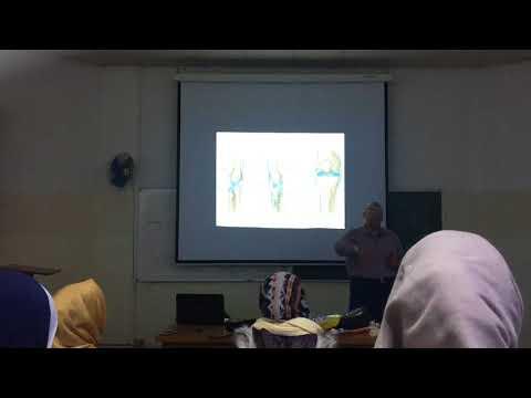 MSS system - Anatomy-
