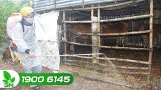 Chăn nuôi bò | Loại thuốc diệt ruồi, muỗi ở chuồng nuôi không ảnh đến bò