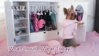 Doggie Closet Funny Video of Dog, Chloe Polka Dot Yorkie - YouTube