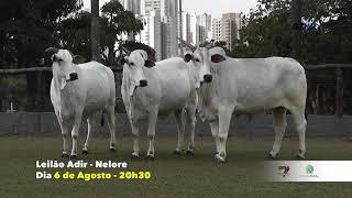 02 - LEILÃO DE NELORE ADIR • 06/08/2021 • 20:30