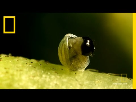 Butterfly: A Life | National Geographic