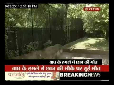 दिल्ली में हत्यारा सफेद बाघ
