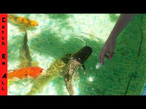 New POOL POND Aquarium! REDEMPTION!_Legjobb videók: Akvárium