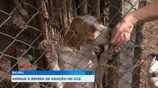 CCZ de Bauru faz campanha para adoção de cães e gatos