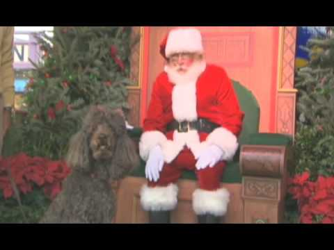 dogs at the holidays - This holiday season Downtown Disney has gone to the dogs. Disney's new